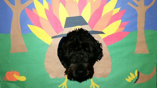 Pet Friendly Hotels Austin, TX - Thanksgiving Pup